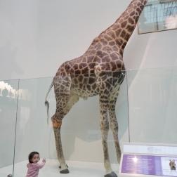 Big giraffe, little baby