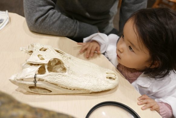 Aligator and crocodile skulls are there for kids to touch!