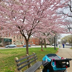 Stopping by @ Staton Park for some cherry blossoms after class