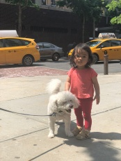Making friends with NY doggie